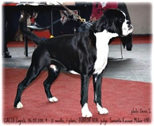 Cacib Zagreb 2011, Angel Junior BOB